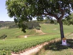 Domaine des Terres de Velle, Auxey-Duresses