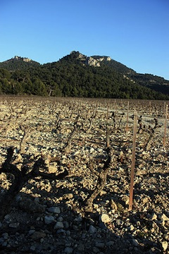 Domaine des Bosquets, Gigondas